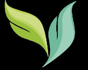 Leaf only – transparent